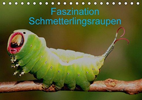 Faszination Schmetterlingsraupen (Tischkalender 2017 DIN A5 quer): In diesem Kalender werden seltene Raupen von Tag- und Nachtfaltern vorgestellt (Monatskalender, 14 Seiten ) (CALVENDO Tiere)