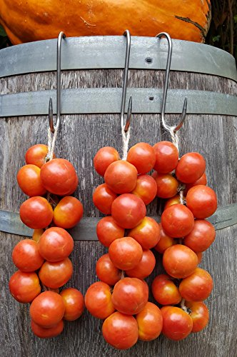 10-samen-mallorquinische-ramallet-tomate-fur-pam-amb-oli-sehr-alte-sorte