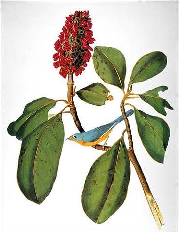 Poster 80 x 100 cm: Audubon: Warbler. von John James Audubon / Granger Collection - hochwertiger Kunstdruck, neues Kunstposter
