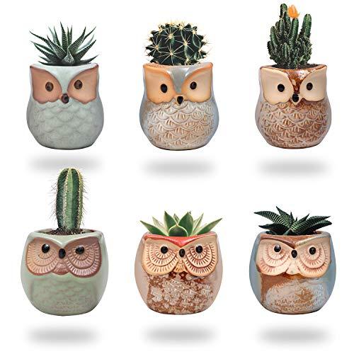 Vasi in Ceramica (6pz) 6,5cm d'Altezza - Piccoli Vasi per Piante Grasse con Fori di Scarico - Vasetti per Piantine in Ceramica Ideale per Casa, Ufficio, Interno ed Esterno ed Arredamento Giardino
