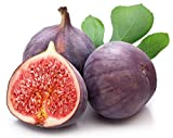 MEIGUISHA Gartensamen-Feigen Tropische Samen Feigen Samen Ficus Carica Feige Samen Seltener Feigenbaum Fruchtsamen Hause Pflanzen für Hausgarten Bepflanzung (50)