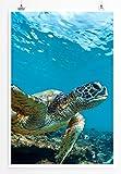 Eau Zone Home Bild - Tierbilder – Schildkröte im Meer Hawaii- Poster Fotodruck in höchster Qualität