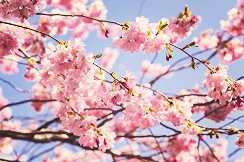 Blütenpracht Frühjahr bis
