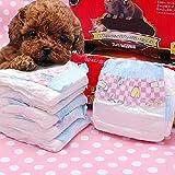 WSN Disposable dog package Einweg-Hundepaket, Einfache Lösung Super saugfähige Tierpflege Belly Wrap Anti-Side-Leakage Weiblicher Hund Super saugfähiges Dicht,S