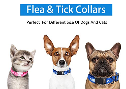 Flea and Tick Collar for All Kinds of Dogs and Cats - safe pet protection from pest bites infestations larvae lice… 7
