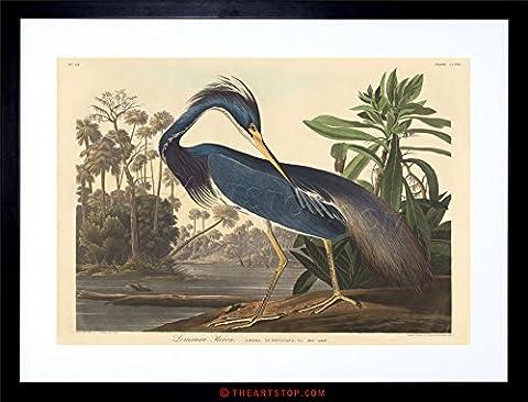 PAINTING BIRD AUDUBON LOUISIANA HERON FRAMED PRINT F12X3581