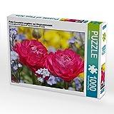 CALVENDO Puzzle Pinke Ranunkeln umgeben von Vergissmeinnicht 1000 Teile Lege-Größe 64 x 48 cm Foto-Puzzle Bild von Gisela Kruse