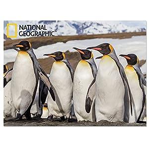 National Geographic NG28511 - Póster Infantil de Pared con diseño de pingüinos