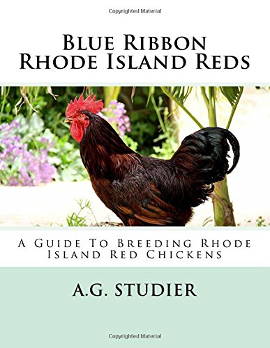 blue-ribbon-rhode-island-reds-a-guide-to-breeding-rhode-island-red-chickens