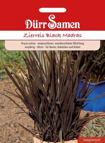 Dürr-Samen Zierreis Black Madras Black Madras