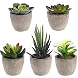 Yardwe 5 PZ Artificiale Succulente Piante in vasi Piante grasse finte pianta Artificiale da Interno Faux Succulente in Vaso Finto Cactus Piante Bonsai Decor per la Casa