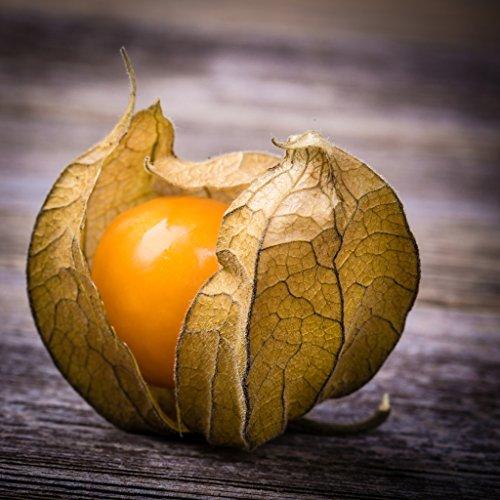 groseeds-fruit-seeds-cape-gooseberry-f-cag-01-250-seeds-minimum-per-packet