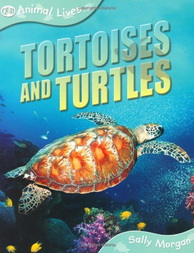 Tortoises and turtles