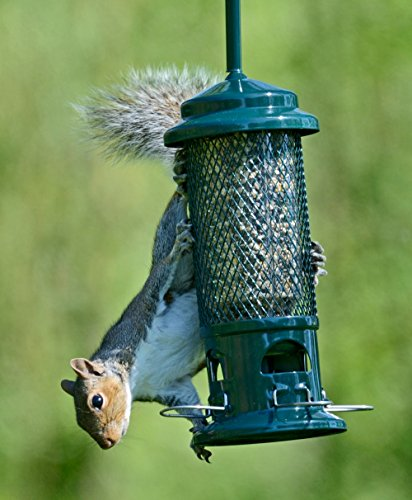 In as much as we cannot stand the devious way of the squirrel, we still can't go around shooting them. The squirrel buster provides you with a gentle and humane way of keeping squirrels at a distance. Immediately the feeder picks up weight associated with a squirrel, it closes the feeding pores. It can comfortably ward off larger birds like pigeons and let the intended smaller birds feed.