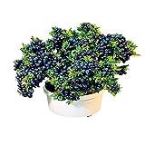Bornbayb Blueberry Seeds Bonsai Fruchtsamen für Indoor Outdoor Pflanzen 100
