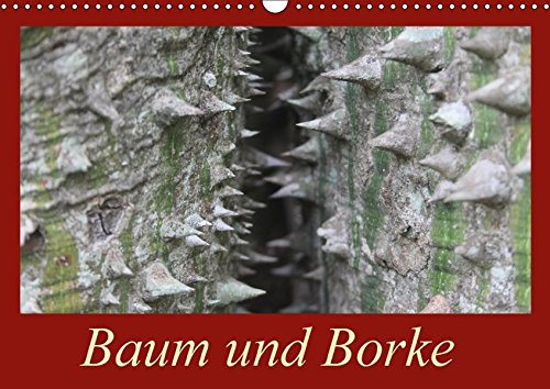 Baum und Borke (Wandkalender 2018 DIN A3 quer): Holz aus Südamerika (Monatskalender, 14 Seiten ) (CALVENDO Natur) [Kalender] [Apr 01, 2017] Schneider, Bettina