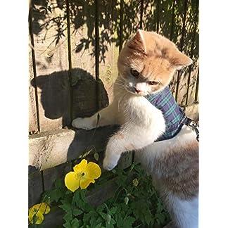 mynwood cat jacket/harness black watch tartan adult cat - escape proof Mynwood Cat Jacket/Harness Black Watch Tartan Adult Cat – Escape Proof 51aO8ZX7dOL