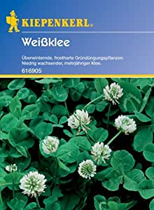 Weißklee - Gründünger v. Kiepenkerl