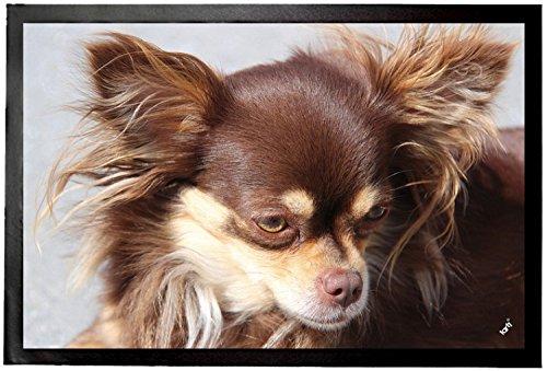 1art1 94316 Hunde - Brauner Langhaar Chihuahua Fußmatte Türmatte 60 x 40 cm