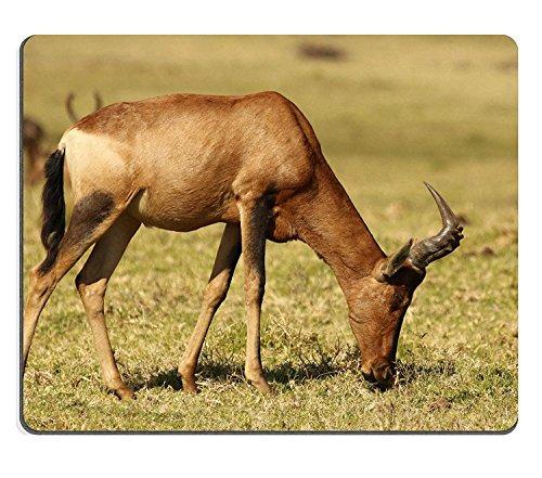 wyrujyu-mousepad-red-hartebeest-alcelaphus-buselaphus-caama-or-alcelaphus-caama-at-krugersdorp-game-
