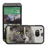 Grand Phone Cases Bild Hart Handy Schwarz Schutz Case Cover Schale Etui // M00140404 Katzen-Kätzchen Tomcat Tier Süße Pelz // HTC One M8