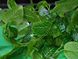 #7: Samriddhi Artificial Dense Leaves Garlands/Creepers For Decoration