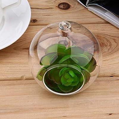 Oyamihin 8 cm Klarglas Runde 1 Loch Blume Stehen Topfpflanze Hängende Hydrokultur für Home Office Hochzeit Dekoration von Oyamihin bei Du und dein Garten