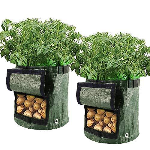 Pflanztasche und Gemüsepflanzen