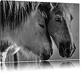 Pixxprint zwei liebevolle Pferde auf Leinwand, XXL riesige Bilder fertig gerahmt mit Keilrahmen, Kunstdruck auf Wandbild mit Rahmen, günstiger als Gemälde oder Ölbild, kein Poster oder Plakat