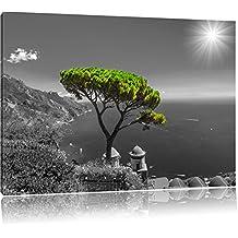 Mediteraner Baum am Mittelmeer schwarz/weiß Format: 120x80 auf Leinwand, XXL riesige Bilder fertig gerahmt mit Keilrahmen, Kunstdruck auf Wandbild mit Rahmen, günstiger als Gemälde oder Ölbild, kein Poster oder Plakat