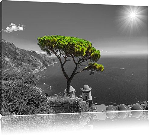 Mediteraner Baum am Mittelmeer schwarz/weiß Format: 120x80 auf Leinwand, XXL riesige Bilder fertig gerahmt mit Keilrahmen, Kunstdruck auf Wandbild mit Rahmen, günstiger als Gemälde oder Ölbild, kein Poster oder Plakat - Erde Zu Blättern