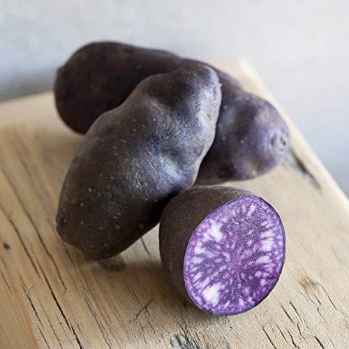 Volmary Trüffel-Kartoffel 'Vitelotte Noire' | festkochend | blaues Fruchtfleisch | 1 Pflanze