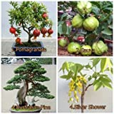 #1: Bonsai Combo - Fruits and Tree Combo - 4 Types of Seeds