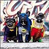 Fotografien Grußkarte (wdm2936)–blanko/Geburtstag–Superhero Hunde–Französische Bulldogge Batman und Robin–Diese Looks Like A Job für...–Gerahmt Serie