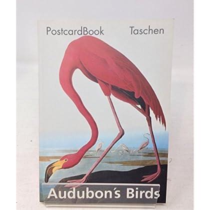 Audubon's birds (oiseaux)