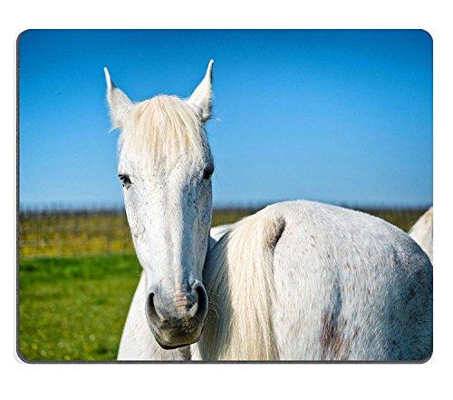 luxlady Gaming Mousepad-ID: 41137055Pretty grau Pferd in einem Weide Nase bis Schwanz mit eine zweite Pferd direkt am Kamera mit stehen seine Ohren Back on a Sunny Blue Sky Day