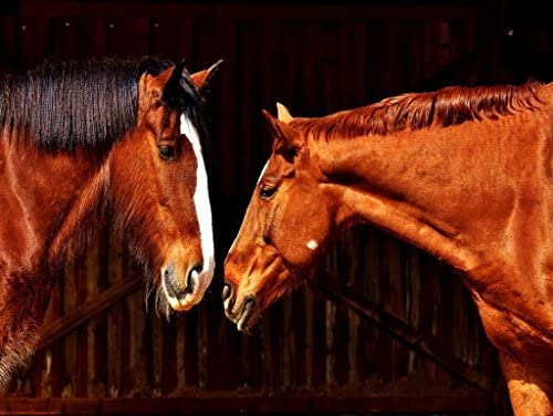 Magnifique Magnifique Magnifique chanteur du Nouvel An, accueillez les voeux du Nouvel An Lais Puzzle Shire Horse 1000 Pieces   Matériaux De Grande Qualité  c52e74