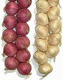 Lihou 5,1x 50,8cm d'oignon et l'ail artificielle Cordes, les légumes