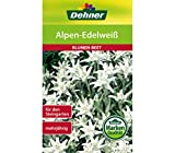 Dehner Blumen-Saatgut, Alpen-Edelweiß, 5er pack (5 x 0.2 g)