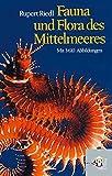 Fauna und Flora des Mittelmeeres -