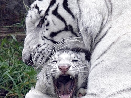 maternal-instinct