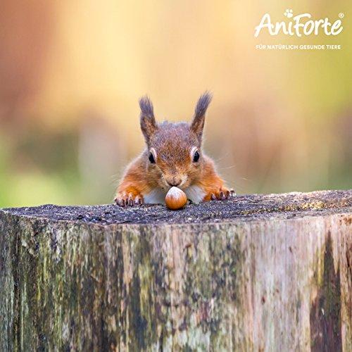 AniForte Wildlife Premium Eichhörnchenfutter 1 kg für Eichhörnchen und Streifenhörnchen - Naturprodukt Mischung, Besondere und artgerechte Eichhörnchen Fütterung - Unsere Spezial Futtermischung - 5
