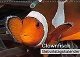 Clownfisch Geburtstagskalender (Wandkalender immerwährend DIN A3 quer): Soll ich mich verstecken oder nicht? Clownfische vor der Kamera ... Tiere [Kalender] [Mar 28, 2015] Gruse, Sven