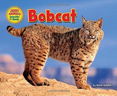 bobcat-desert-animals-searchin-for-shade-by-meish-goldish-2015-01-01