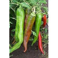 Portal Cool Las semillas de chile - NuMex Big Jim - 20 semillas