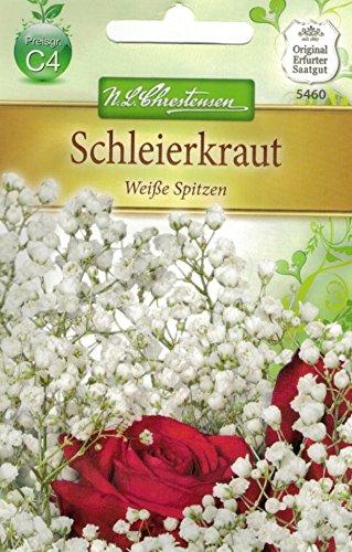 Chrestensen Schleierkraut 'Weiße Spitzen'