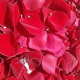 Frische rote Rosenblätter: ca. 5,4 Liter echte Rosenblütenblätter für romantische Dekorationen...
