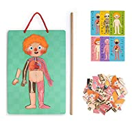 Tawcal Human Body Magnetic, Kids Anatomy Body Parts Boys Cards Girls Cards Body Structure Cognitive Magnetic Jigsaw Puzzle Toy Learning Tool Early Education Toy for Kids Kindergarten