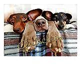 DigitalOase Gutschein Geschenkkarte Gutscheinkarte Geburtstag Geburtstagskarte Format DIN A4 A3 Klappkarte PanoramaUmschlag #DOGS Tiere Hunde