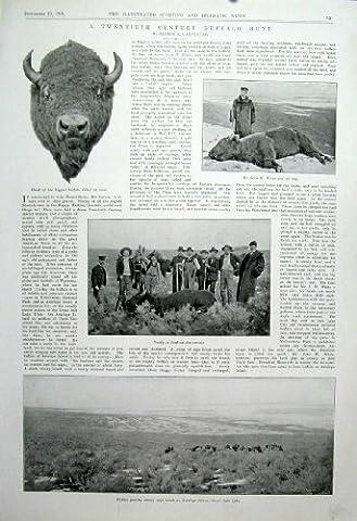 A Twentieth Century Buffalo Hunt Old Print 1904